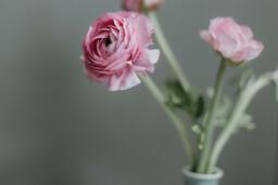 Flowers  image 4