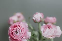 Flowers  image 9
