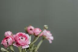 Flowers  image 12