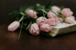 Flowers on Bible light pink tulips open 16x9 1794cd30 9bc7 42be 9992 806774380358 image