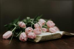 Flowers on Bible light pink tulips open 16x9 4c957cd5 5779 4193 b4f3 6fc876e75e53 image