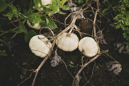 Fall 2018 white pumpkins 16x9 4f76499b 44ba 4a2a a006 f44d6be86905 image