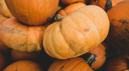 Fall 2018 orange pumpkins 16x9 82e2beaa 6bad 42b5 a5db 702b3b8069ed image