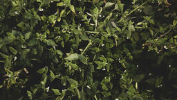 Fall 2018 greenery 16x9 d397eabd 5090 4b5a 9256 ec186fd04e66 image