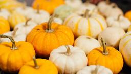 Fall Feast  image 3