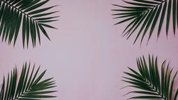 Palm Branches  image 1