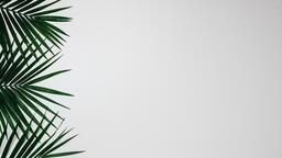 Palm Branches 16x9 6eb7cb0d 97e9 474d bff2 f16328a60af2 image