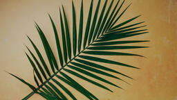 Palm Branches  image 2