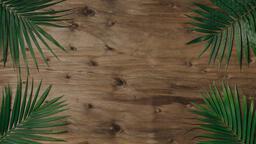 Palm Branches 16x9 6ce1c62c c0d8 489d 8f31 1e916f39e1fb image