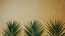 Palm Branches 16x9 8bd50d40 b384 47a5 869d f4f50971cb57 image