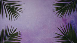 Palm Branches  image 3