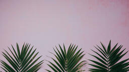 Palm Branches  image 5