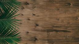 Palm Branches 16x9 98a3505c 4bd0 42dc 8c11 b1c9b54b82af image