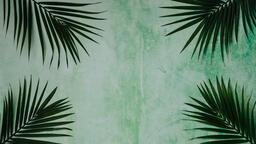 Palm Branches 16x9 99c23e5e fe38 4367 8ac8 d38334e6e55b image
