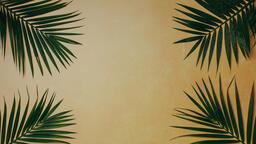 Palm Branches 16x9 384ecb69 8589 426c 8d7e ba4b08e07dfd image
