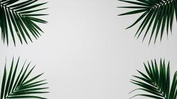 Palm Branches 16x9 1993d76b 88cf 45d4 a535 3e04b4c54dab image