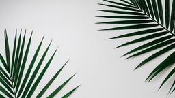 Palm Branches 16x9 4d5aaf7b 1811 4173 a00e 272920e7ab6c image