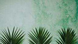 Palm Branches 16x9 fe88a990 ce22 4d99 9480 1b4db42fe4bd image
