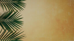 Palm Branches 16x9 5704c294 62e5 4b93 950a 5da2703b7895 image