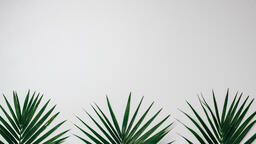 Palm Branches  image 7