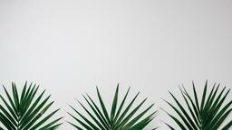 Palm Branches 16x9 6ed379ab fca0 4b07 a99d e99ad523af1f image