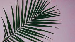 Palm Branches branch 16x9 763fc6c0 3fa5 4100 8855 afbdbe51f68e image