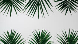 Palm Branches  image 8