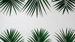 Palm Branches 16x9 3265d4cb 4f66 4be2 863a 5b301db4ab30 image