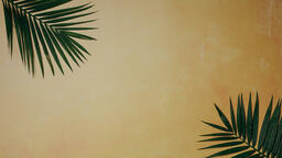 Palm Branches 16x9 548750cc 4d92 45ac b45a 7dc4fa6512d1 image