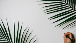 Palm Branches  image 4