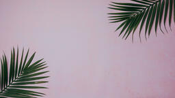 Palm Branches  image 6