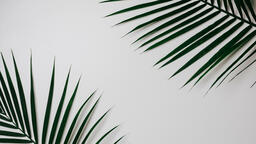 Palm Branches  image 9