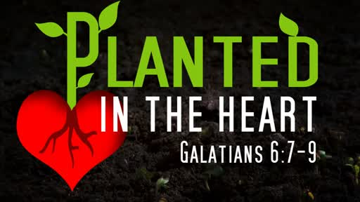 Planted In The Heart