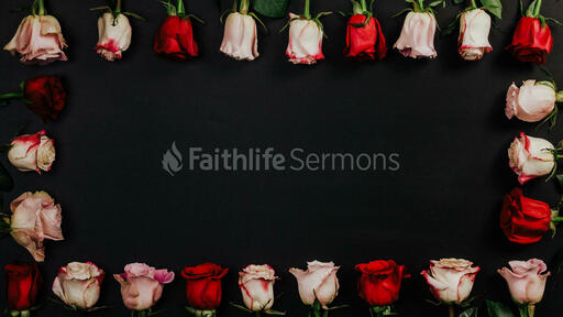 Roses and Relationships