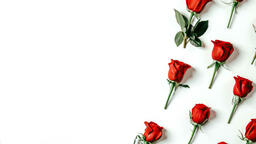 Roses and Relationships  image 1
