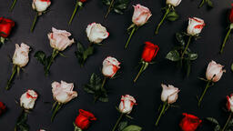Roses and Relationships  image 3