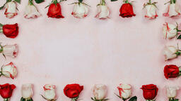 Roses and Relationships  image 5