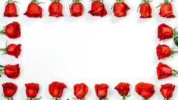 Roses and Relationships  image 7