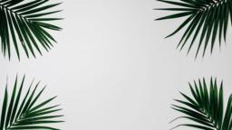Palm Leaves White happy easter 16x9 3ba3ef4c e7b3 4476 944c b6e3716d8073 PowerPoint image