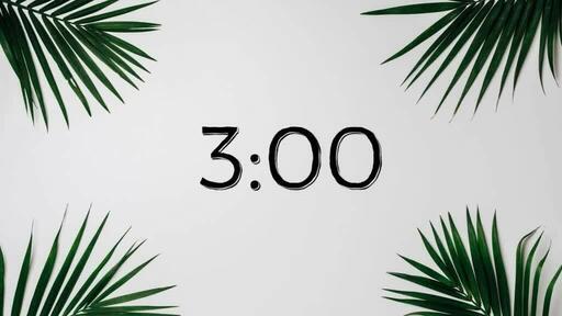 Palm Leaves White - Countdown 3 min
