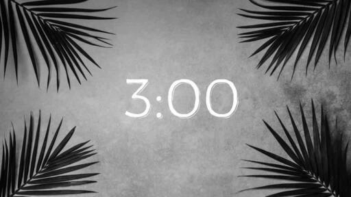 Palm Leaves Grey - Countdown 3 min