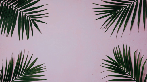 Palm Leaves Pink