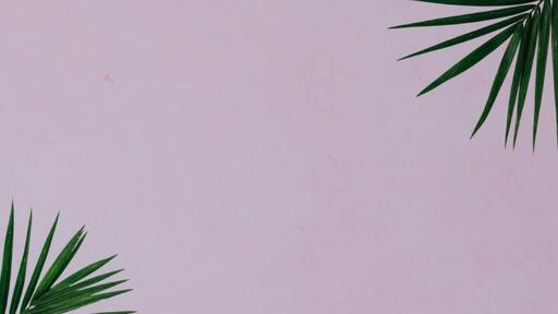 Palm Leaves Pink - Content - Motion