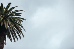 Palm Tree  image 3