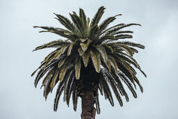 Palm Tree  image 1