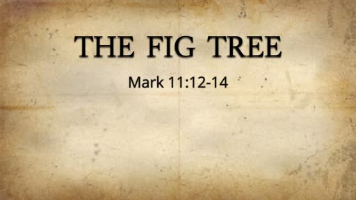The Fig Tree