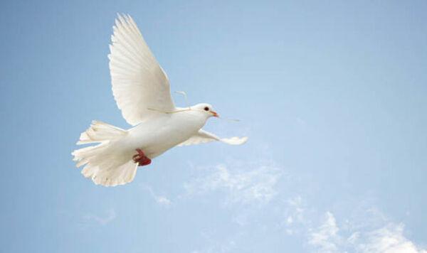 Praise For Peace