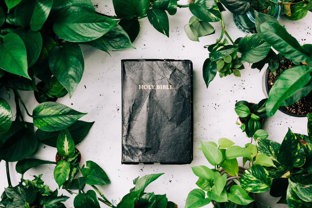 Holy Bible Surrounded by Foliage large preview