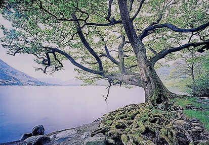 Roots & Trees (Jer 17:7-8)