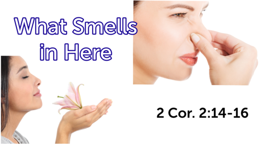 What Smells in Here?